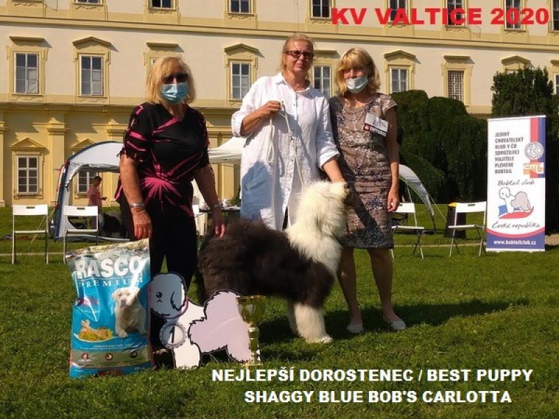2020kv-best-puppy77264492-B0D1-CBD8-AB9A-4915EB16275F.jpg